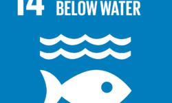 I negoziati per un nuovo accordo relativo alla conservazione e l'uso sostenibile delle risorse marine biologiche internazionali